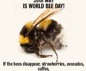 U.N. Declares World Bee Day | Woollahra Municipal Council kills 50,000 bees in Sydney | Host an event.